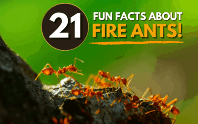 21 Fun Facts About Fire Ants and How To Control Them With ExperiGreen