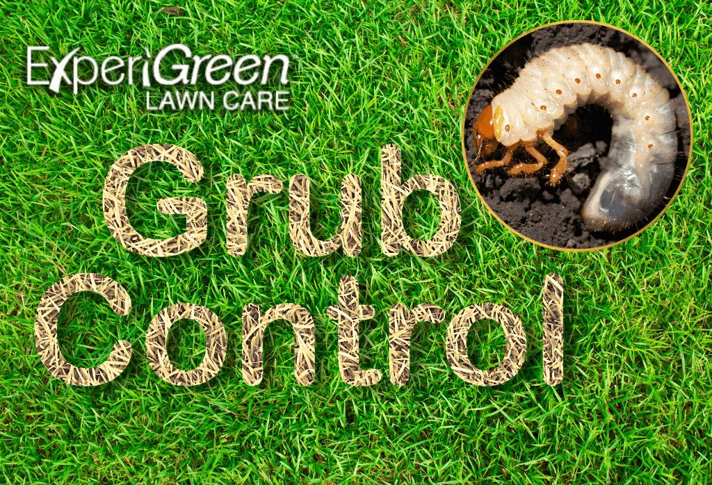 Lawn Grub Control Program