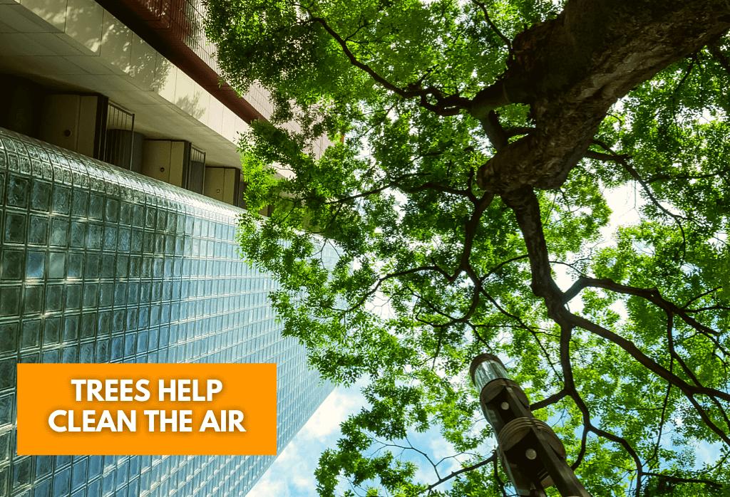 Trees Help Clean The Air