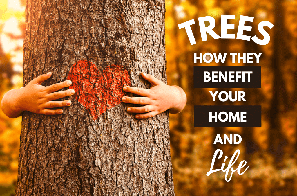 Trees; How They Benefit Your Home & Life