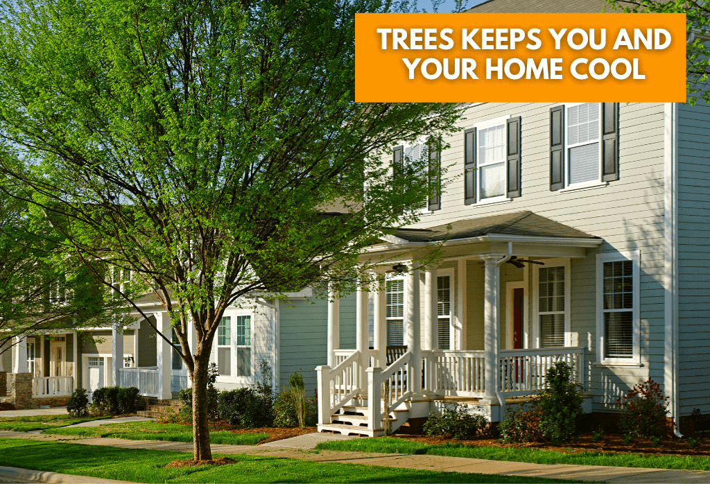 Trees Keep You and Your Home Cool