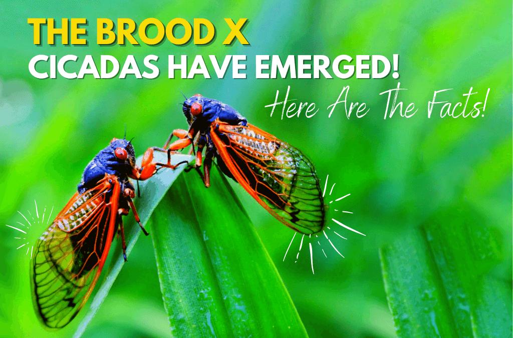Cicadas, cicadas, cicadas, when will it end