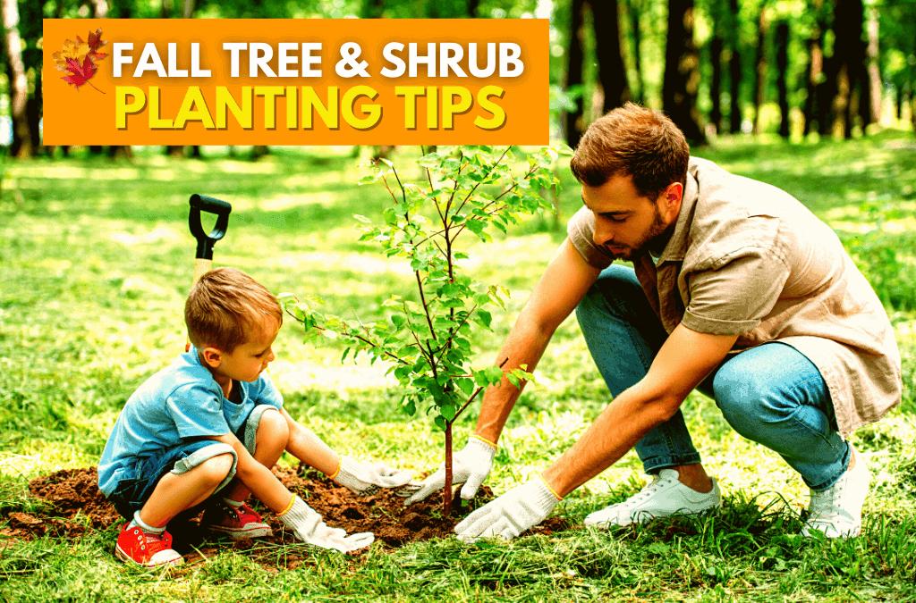 Fall Tree Shrub Planting Tips