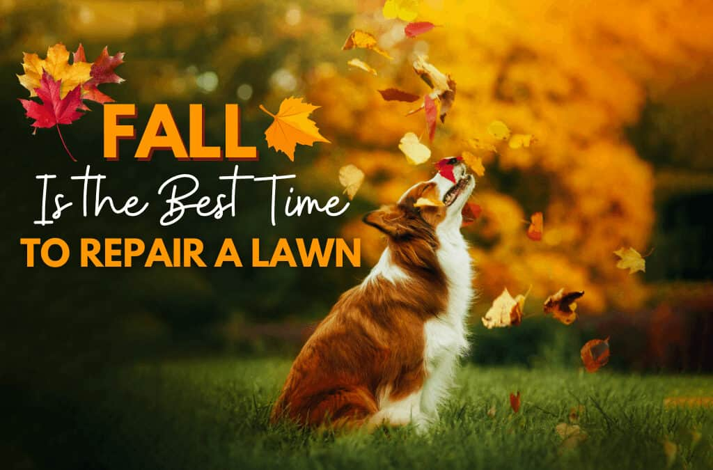 Fall Is The Best Time To Repair A Lawn