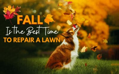 Fall Is The Best Time To Repair Your Lawn