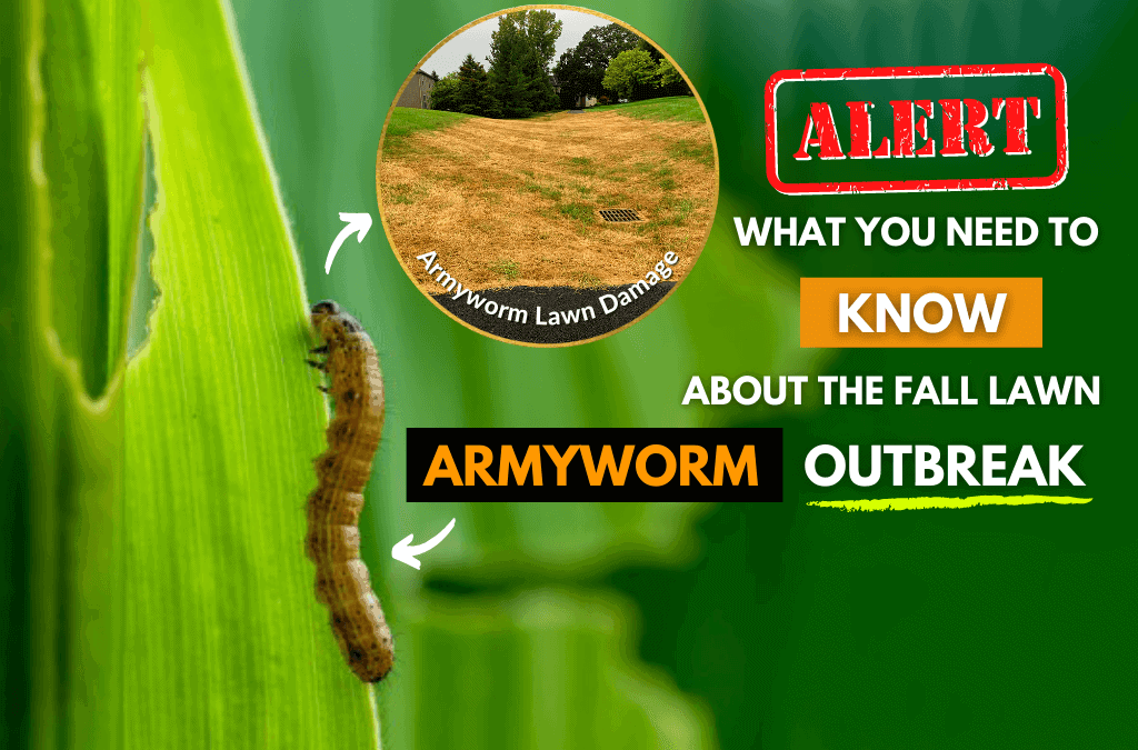 Fall Lawn Armyworm Outbreak: What You Need To Know