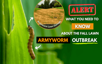 Alert The Fall Lawn Armyworm Outbreak