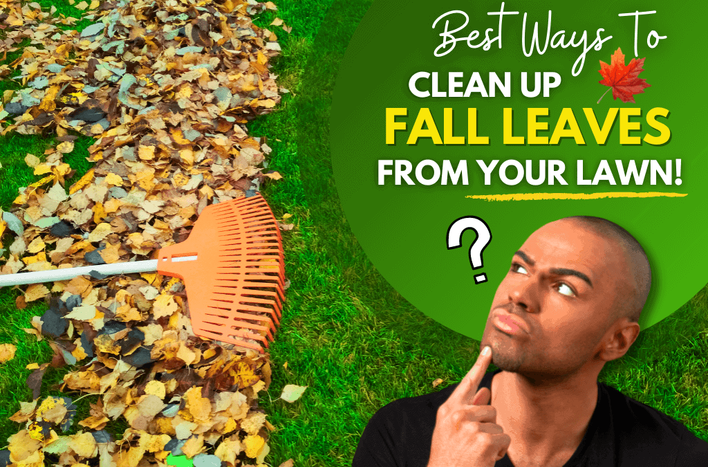 What Can I Do With Fall Leaves