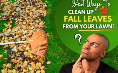 Best Ways To Cleanup Fall Leaves From Your Lawn